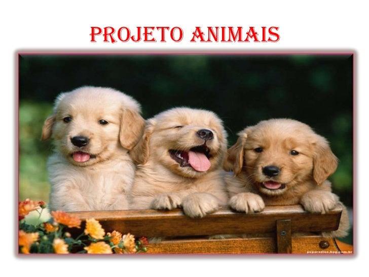 PROJETO ANIMAIS<br />