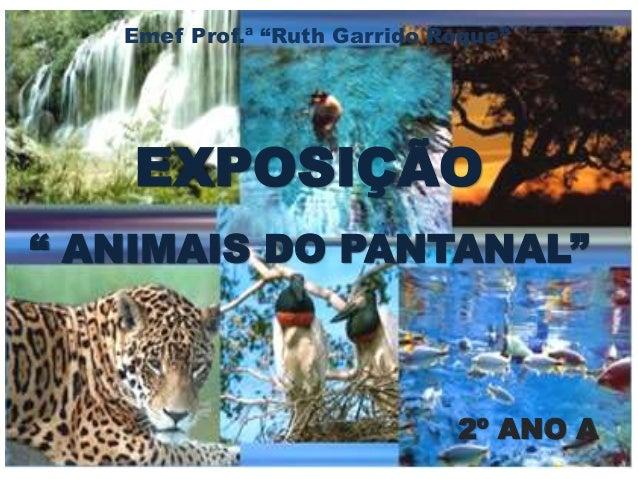 """Emef Prof.ª """"Ruth Garrido Roque""""  EXPOSIÇÃO  """" ANIMAIS DO PANTANAL""""  2º ANO A"""