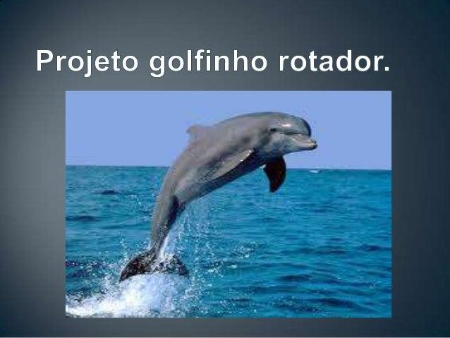 • O Projeto Golfinho Rotador, criado em 1990, éresultante da parceria do Centro MamíferosAquáticos, um centro de fauna esp...