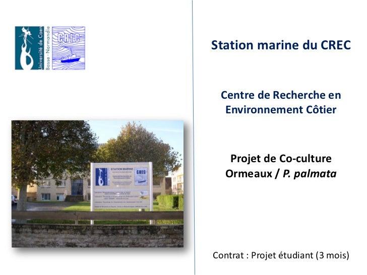 Station marine du CREC  Centre de Recherche en   Environnement Côtier    Projet de Co-culture   Ormeaux / P. palmataContra...