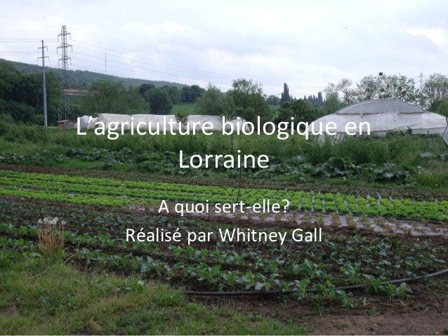 L'agriculture biologique en          Lorraine        A quoi sert-elle?    Réalisé par Whitney Gall