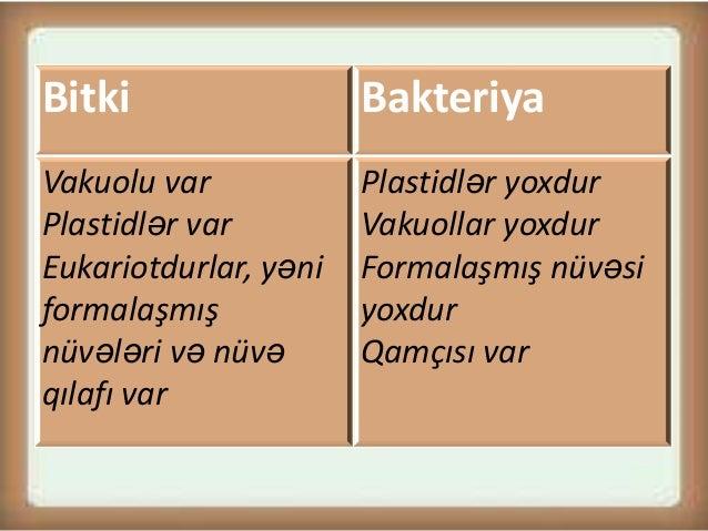 Prokariot orqanizmlər Slide 3