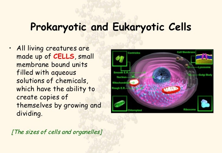 prokaryotic vs eukaryotic cells For those that didn't know, there are many similarities between prokaryotic and eukaryotic cells these are two types of cells that make up living organisms, and this.