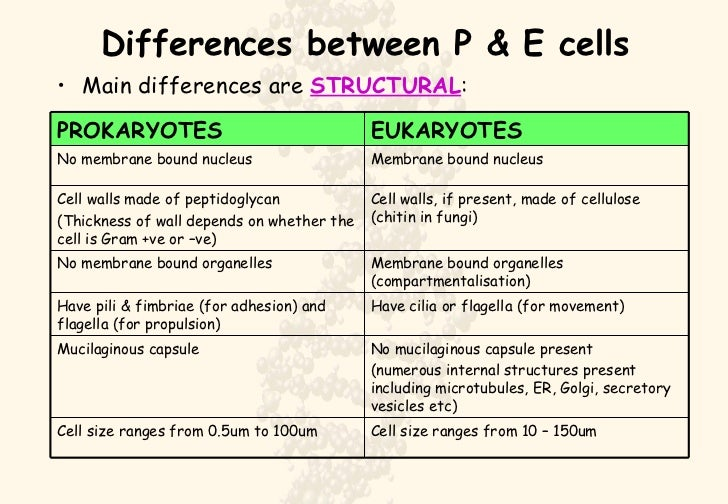 detailed differences between eukaryotic and prokaryotic cells Greg foot explains the main differences between light and electron microscopes most animal cells range in size from 001 mm - 005 mm and plant cells from 001 mm - 010 mm the human eye can see.