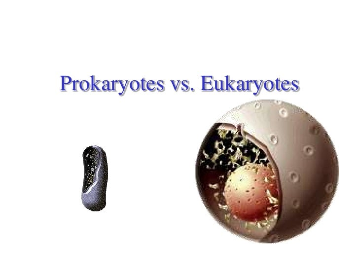 bio prokaryotes vs eukaryotes Clear and simple- understand the similarities and differences between prokaryotic and eukaryotic cells find more free tutorials, videos and readings for the science classroom at ricochetsciencecom.
