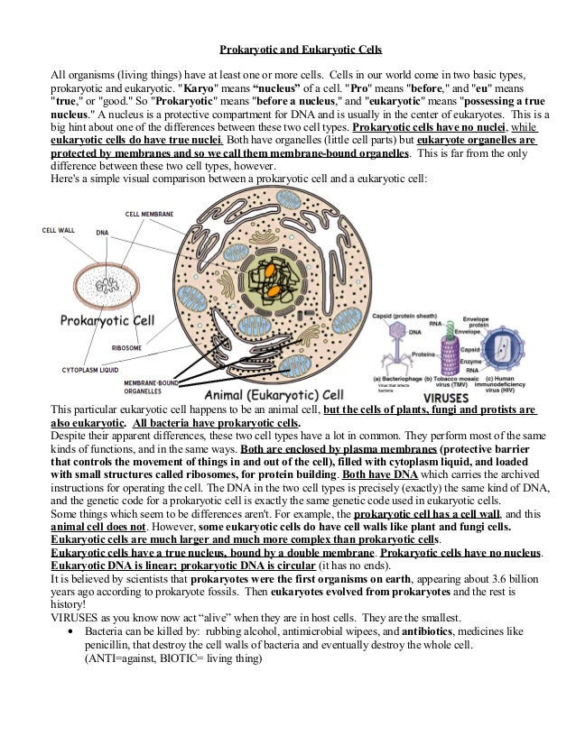 Prokaryoticandeukaryoticcells – Prokaryotic and Eukaryotic Cells Worksheet