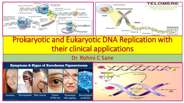 Prokaryotic and Eukaryotic DNA Replication with their clinical applications Dr. Rohini C Sane