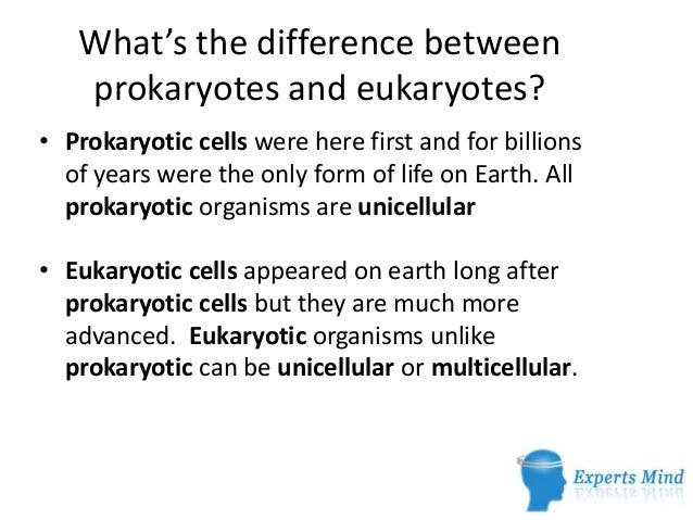 Differences between prokaryotic and eukaryotic cells essay help