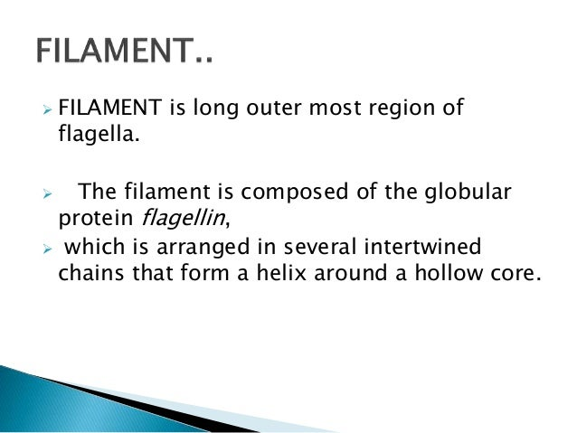 flagella structure and function
