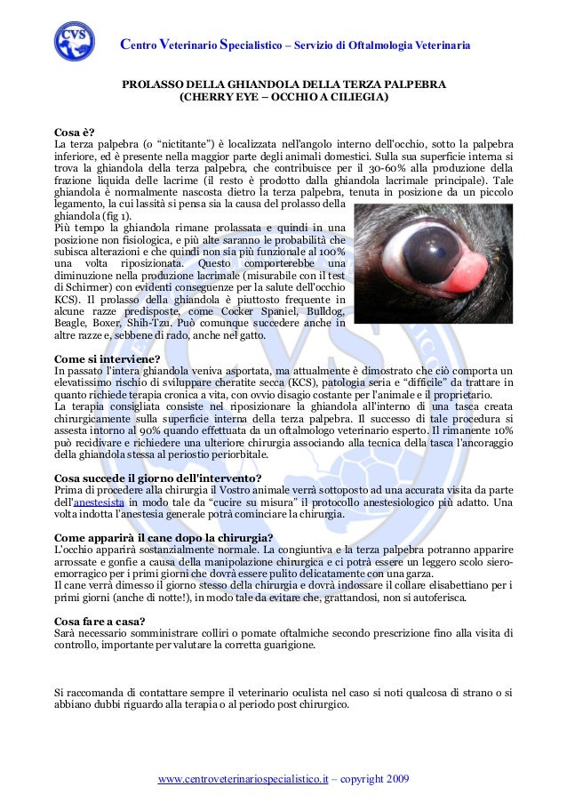 Centro Veterinario Specialistico – Servizio di Oftalmologia Veterinaria               PROLASSO DELLA GHIANDOLA DELLA TERZA...