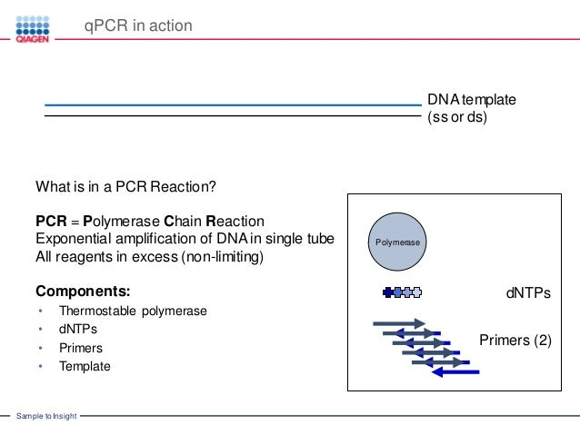 how much template dna for pcr - introduction to real time pcr q pcr qpcr qrt pcr qpcr