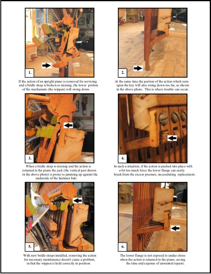Technical Info 1   bridle straps Slide 3