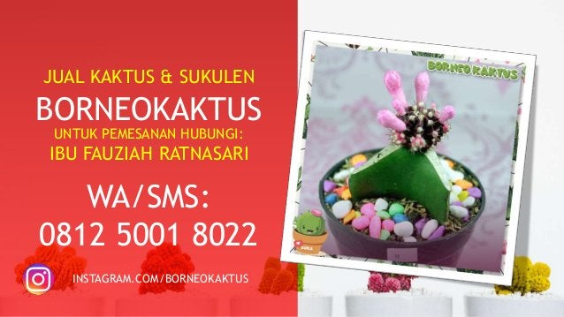 TERPERCAYA!!!  0812-5001-8022 (TSEL) Jual Kaktus Murah Banjarmasin
