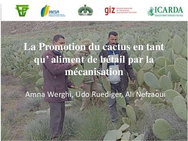 La Promotion du cactus en tant qu' aliment de bétail par la mécanisation Amna Werghi, Udo Ruediger, Ali Nefzaoui
