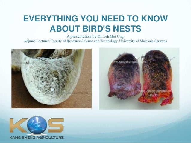 EVERYTHING YOU NEED TO KNOWABOUT BIRD'S NESTSA presentation by Dr. Leh Moi Ung,Adjunct Lecturer, Faculty of Resource Scien...