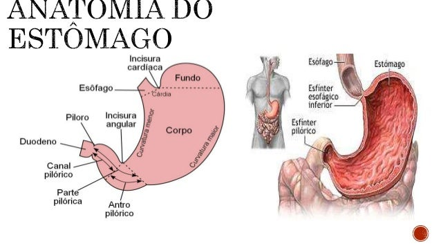  É uma abertura na parede anterior do estômago através de uma incisão abdominal para obtenção de acesso e exploração do s...