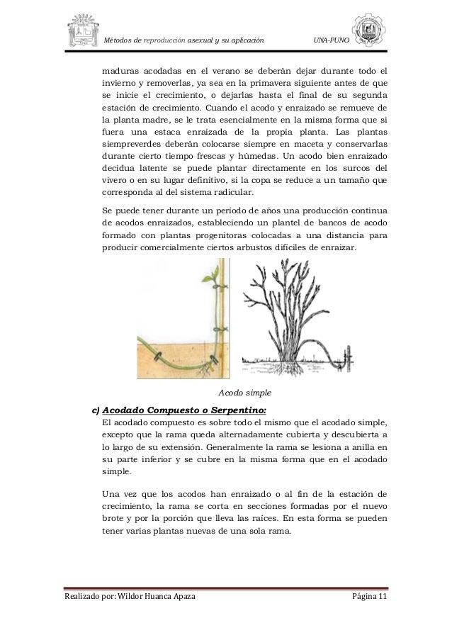 Variacion genetica en plantas propagadas asexualmente