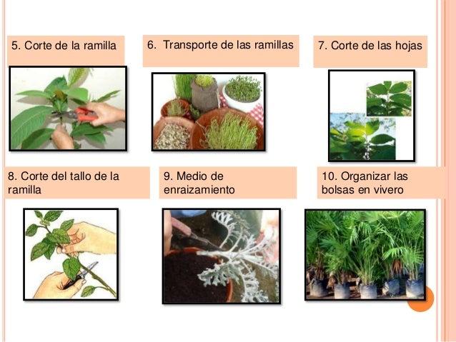 Propagacion de planta for Incompatibilidad en plantas