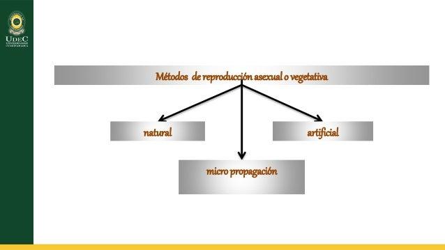 propagacion vegetativa o asexual Slide 3
