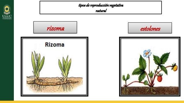 Reproduccion asexual de las plantas pdf download