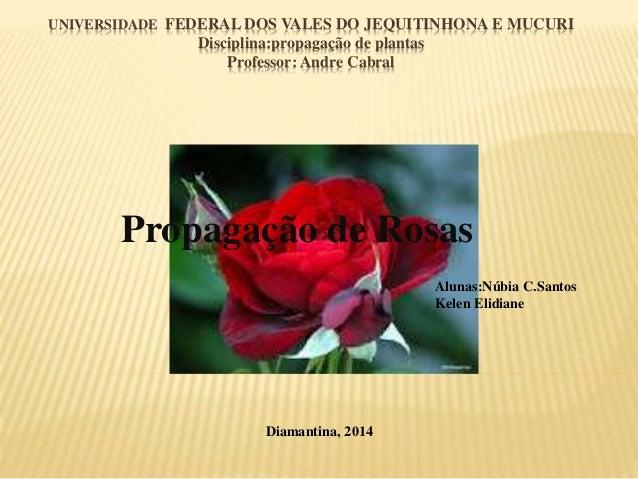 UNIVERSIDADE FEDERAL DOS VALES DO JEQUITINHONA E MUCURI Disciplina:propagação de plantas Professor: Andre Cabral Propagaçã...