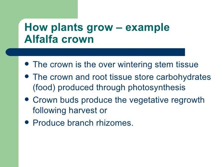 Vegetative propagation.