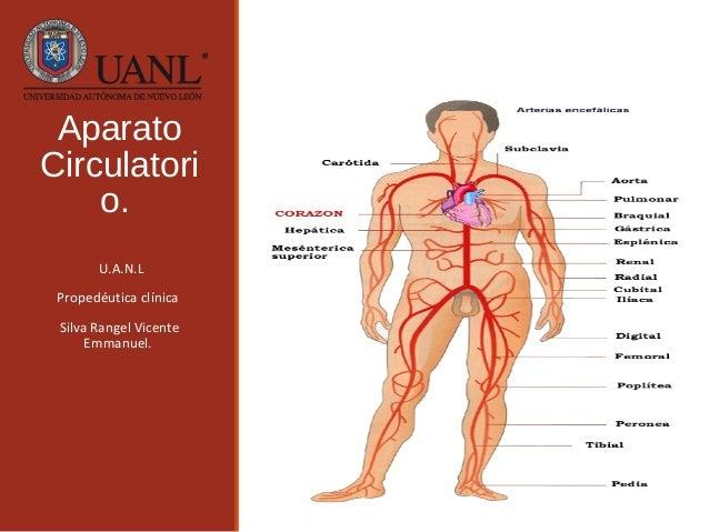 Circuito Circulatorio : Aparato circulatorio