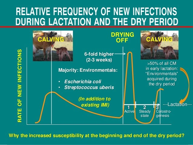 Proper dry off procedures to prevent new infections and
