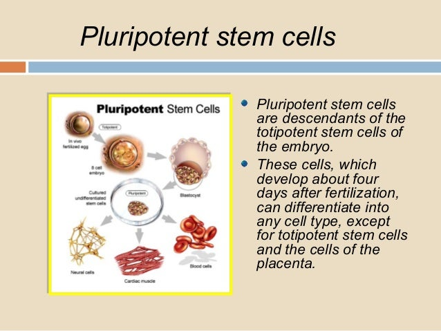 Properties and uses of stem cells