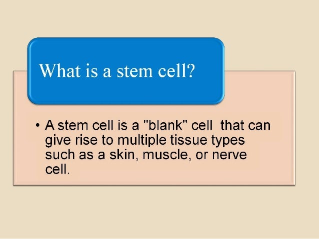 Properties and uses of stem cells Slide 3