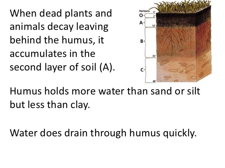 Soil And Water Facts For Kids