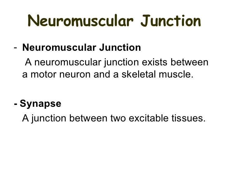 Neuromuscular junction and synapses by DRIRUM – Neuron and Neuromuscular Junction Worksheet