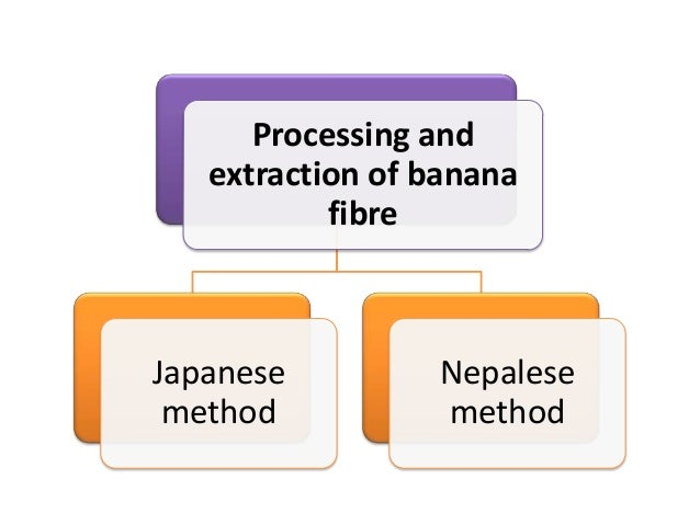 Japanese method• In the Japanese method of making banana fiber, the  care is taken as early from the plant cultivation sta...