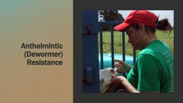 Anthelmintic (Dewormer) Resistance