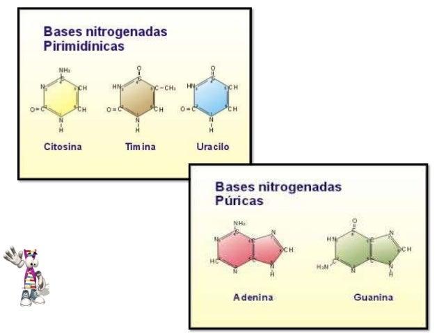Propiedades De Las Bases Nitrogenadas Alisson León