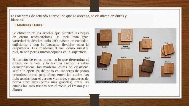 Propiedades de la madera for Como se llaman los arboles que no pierden sus hojas
