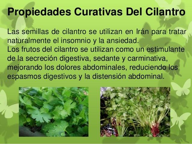 propiedades curativas de algunas plantas medicinales