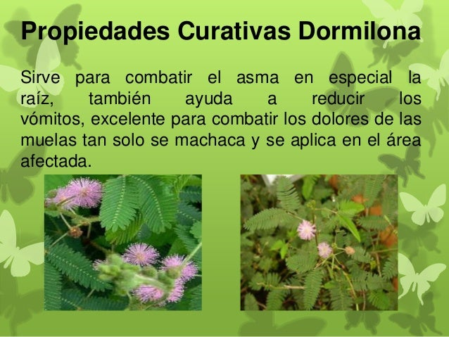 Propiedades curativas de algunas plantas medicinales for 10 plantas ornamentales y para que sirven