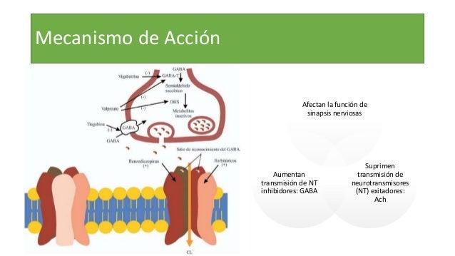 Mecanismo de Acción Afectan la función de sinapsis nerviosas Suprimen transmisión de neurotransmisores (NT) exitadores: Ac...