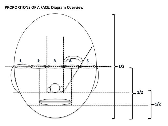 Proportions of a face diagram overview