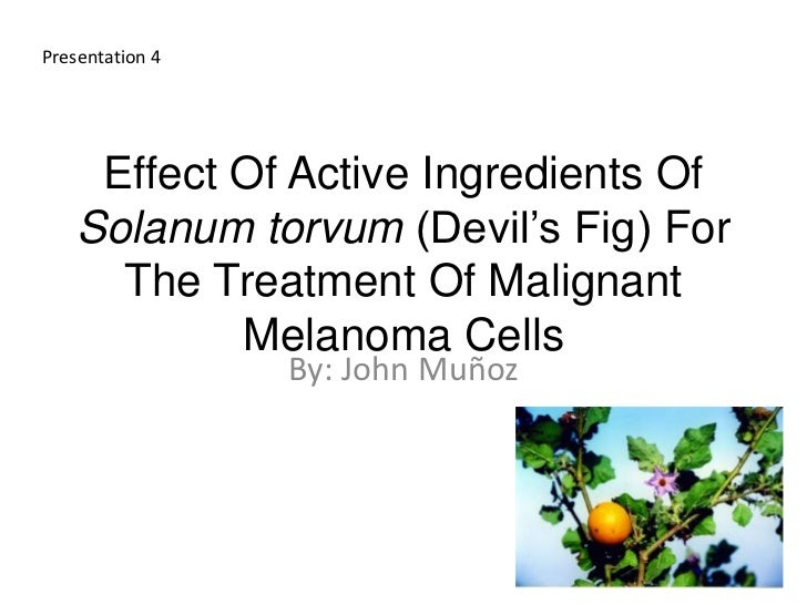 Presentation 4     Effect Of Active Ingredients Of    Solanum torvum (Devil's Fig) For      The Treatment Of Malignant    ...