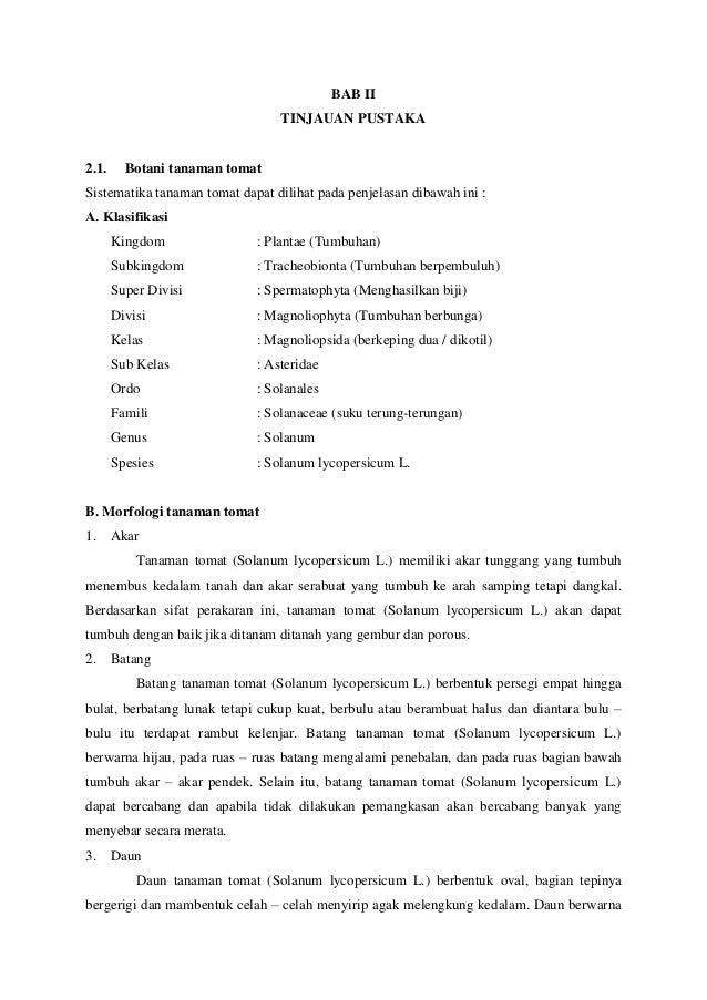 Proposal penelitian tanaman tomat Slide 3