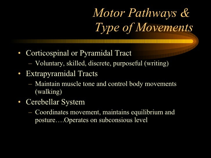 Motor Pathways &  Type of Movements <ul><li>Corticospinal or Pyramidal Tract </li></ul><ul><ul><li>Voluntary, skilled, dis...