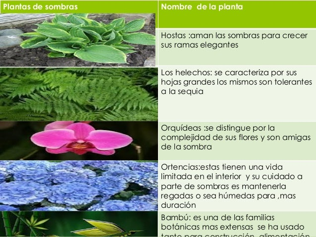 propuesta de plantas y de sombras