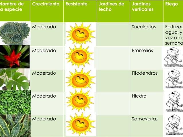 Propuesta de plantas y de sombras for 5 nombres de plantas ornamentales