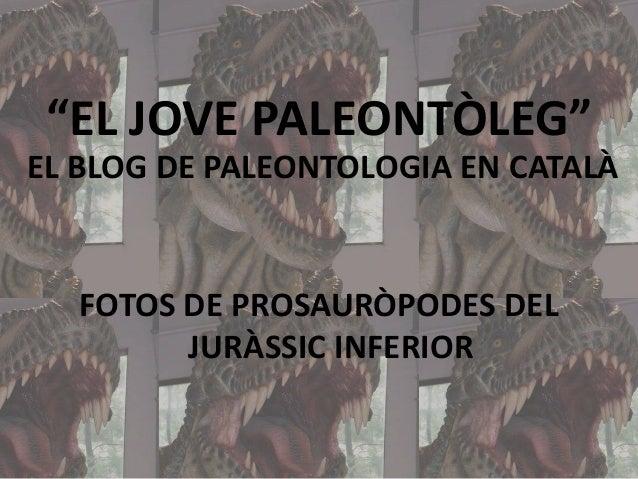 """""""EL JOVE PALEONTÒLEG"""" EL BLOG DE PALEONTOLOGIA EN CATALÀ  FOTOS DE PROSAURÒPODES DEL JURÀSSIC INFERIOR"""