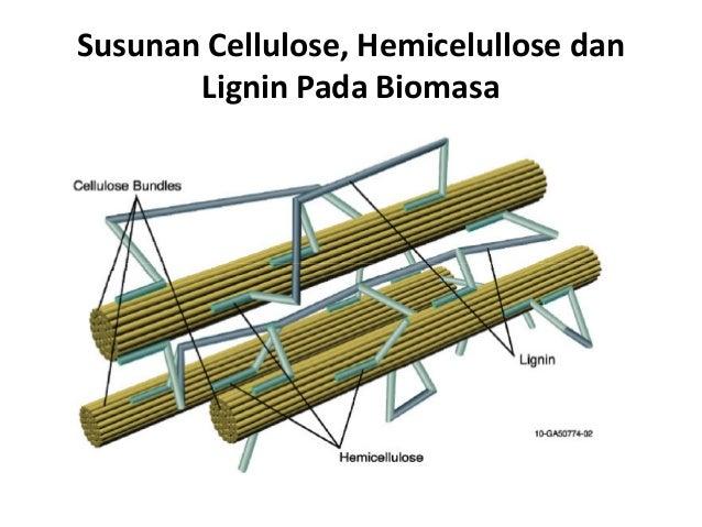 Susunan Cellulose, Hemicelullose dan Lignin Pada Biomasa
