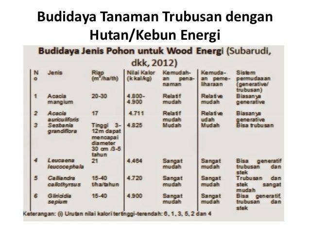 Budidaya Tanaman Trubusan dengan Hutan/Kebun Energi