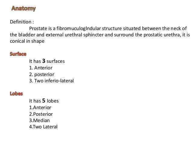 Prostate Anatomyphysiology Pathology