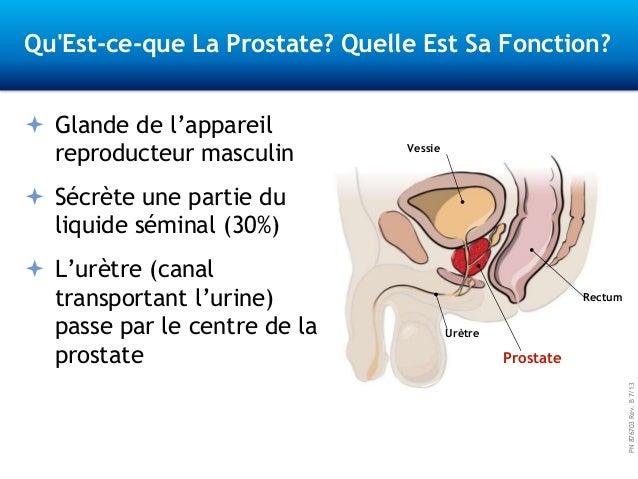 PN876703Rev.B7/13 Qu'Est-ce-que La Prostate? Quelle Est Sa Fonction?  Glande de l'appareil reproducteur masculin  Sécrèt...